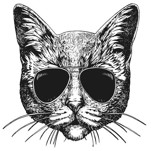 Transfert thermocollant petit modèle Chat lunette
